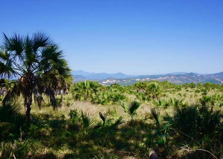 Alta Vista Views